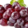 不吃酸葡萄